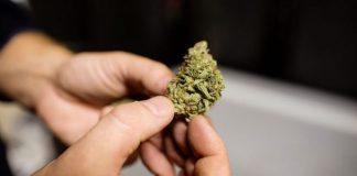 Cannabis-696x392